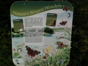 Butterfly Board