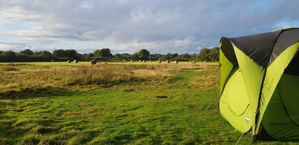 Camping in a meadow at Knepp Safaris